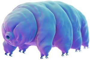 Aliens Among Us: How I Analysed Non-Model Organism Data in Partek Flow
