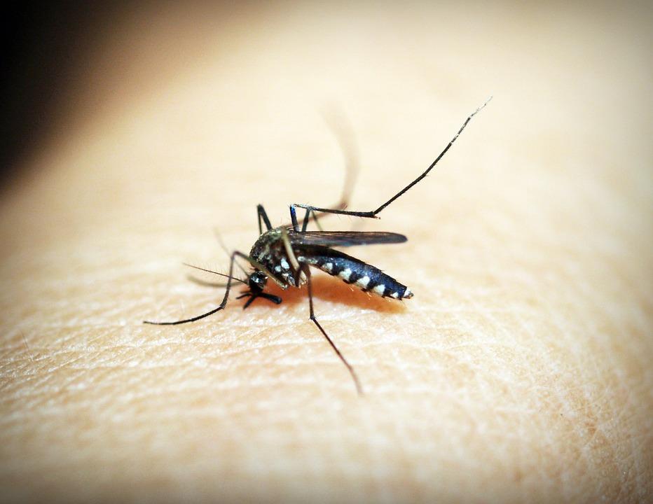 Mosquito on human skin depicting Zika virus