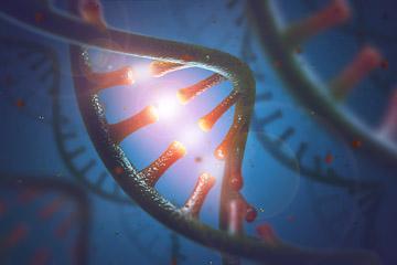 DNA and RNA molecules