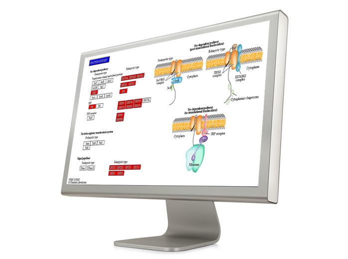 Computer show Pathway Analysis