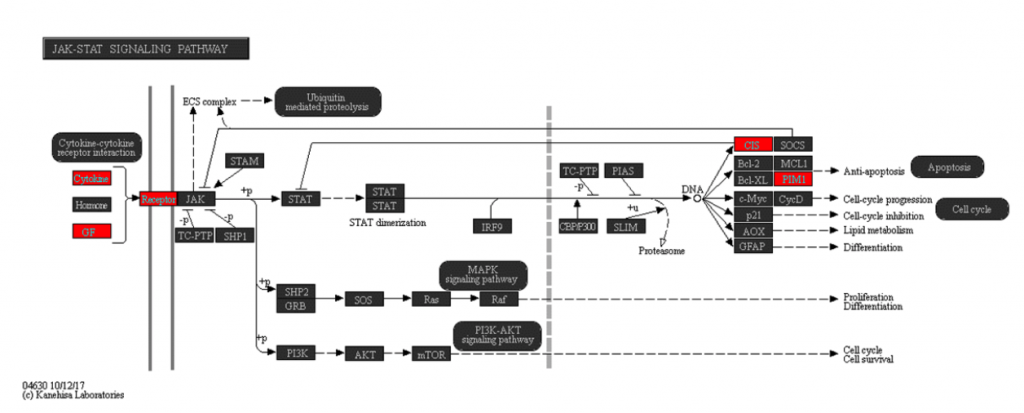 KEGG pathway map for the JAK-STAT signaling pathway