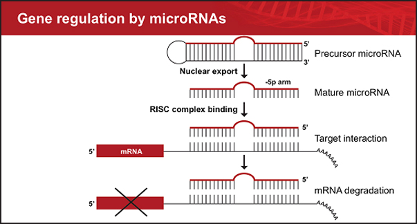 http://How%20to%20Integrate%20microRNA-Seq%20and%20Gene%20Expression%20Data